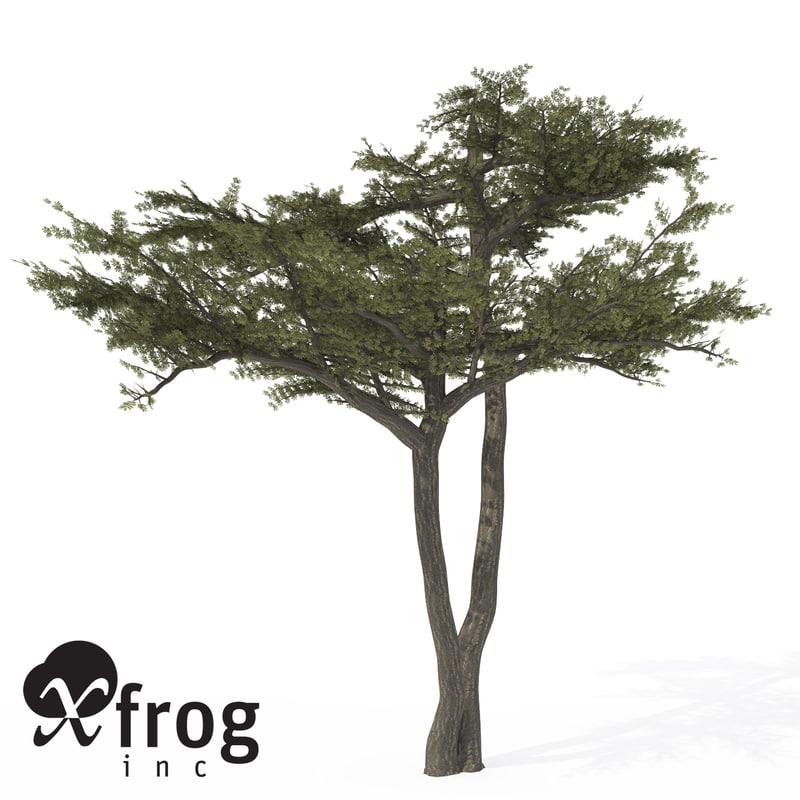 3d xfrogplants umbrella acacia tree