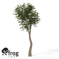 3d xfrogplants arrow poison tree