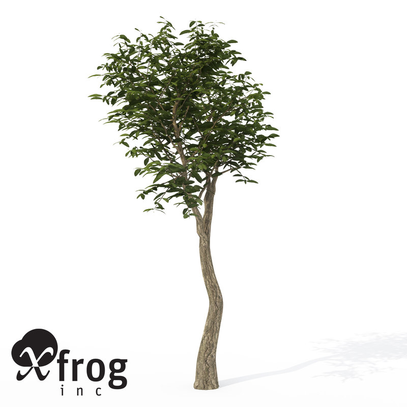 3d xfrogplants arrow poison tree