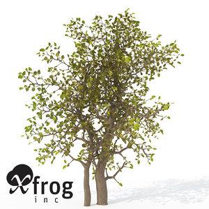 xfrogplants egyptian carissa tree 3ds