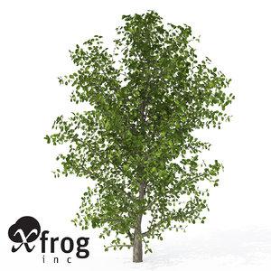 3d model xfrogplants kei apple tree