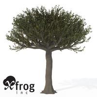 forest sandpaper fig tree 3d model