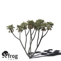 xfrogplants african doum palm 3d model