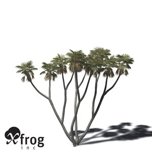 xfrogplants african doum palm 3d model