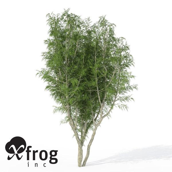 3ds max xfrogplants african mahogany tree