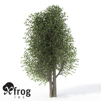 3d xfrogplants wild peach tree