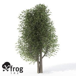 3d xfrogplants wild peach tree