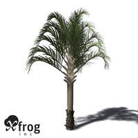 3d model xfrogplants triangle palm