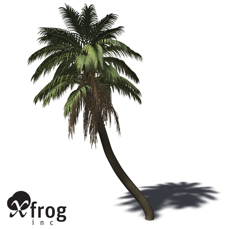 3d xfrogplants senegal date palm model