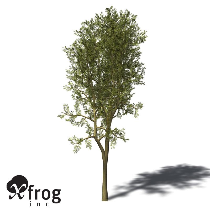 max xfrogplants yellowwood tree