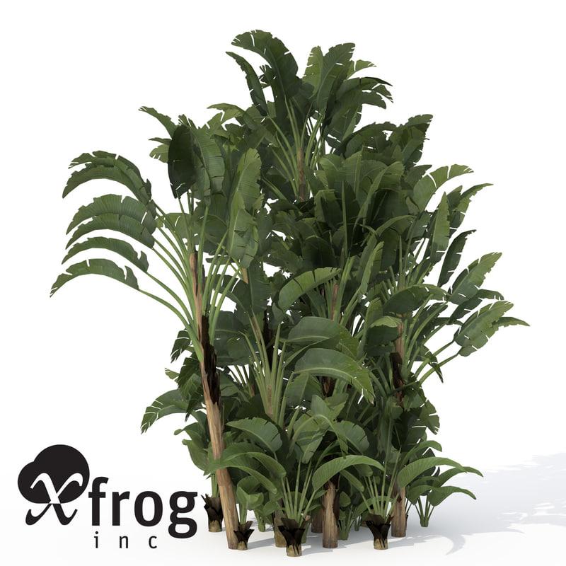 3ds xfrogplants white bird paradise
