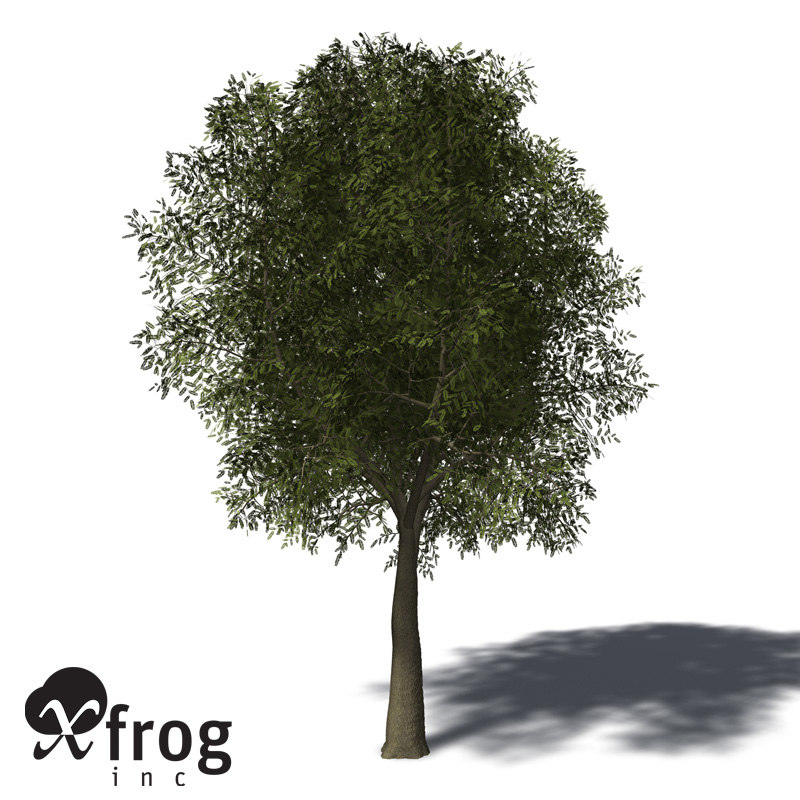 maya xfrogplants tamarind tree