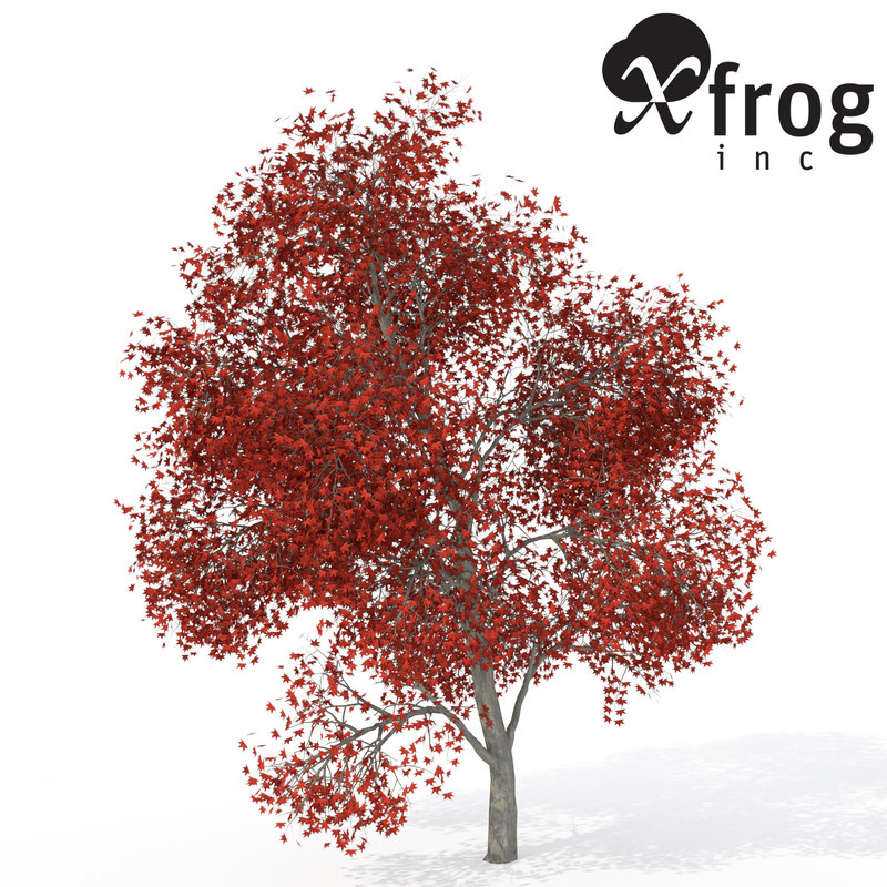 xfrogplants autumn japanese maple 3d 3ds