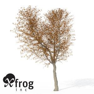 3d xfrogplants autumn norway maple model