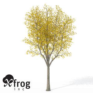 xfrogplants autumn sycamore maple 3d model