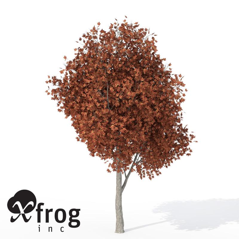 c4d xfrogplants autumn silver maple