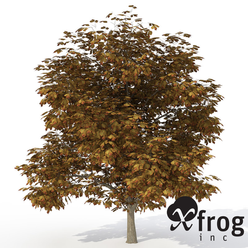 3d model xfrogplants autumn horse chestnut