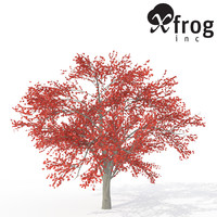 XfrogPlants Autumn Serviceberry