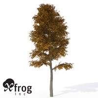 3d xfrogplants autumn european beech