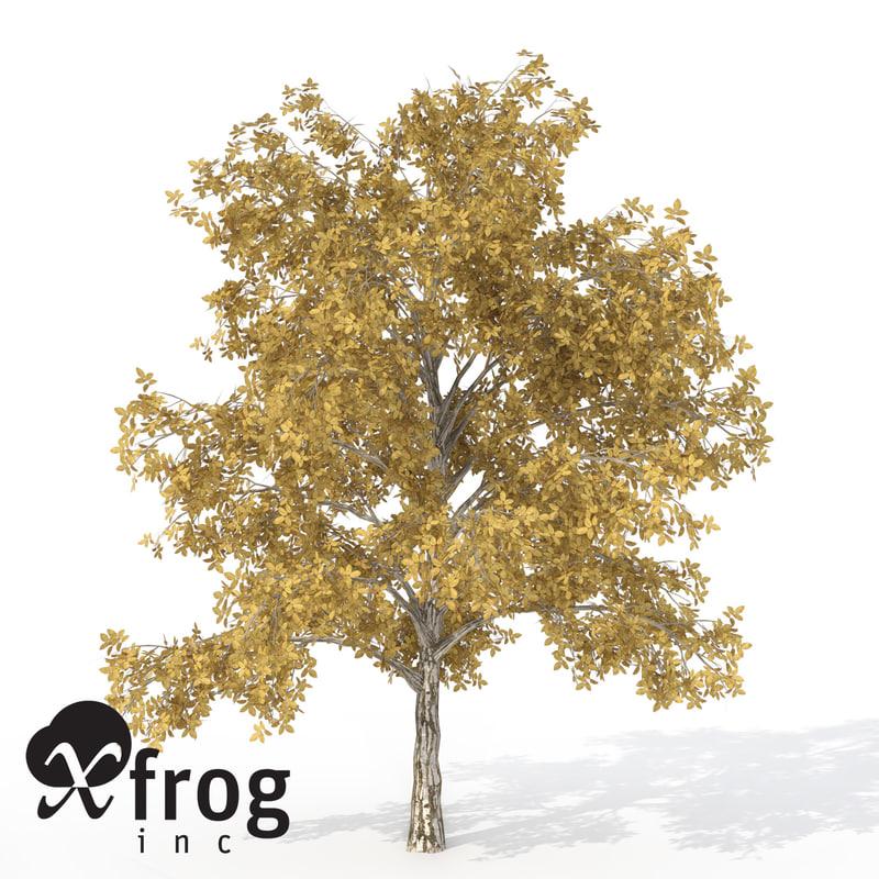 3d xfrogplants autumn european walnut model