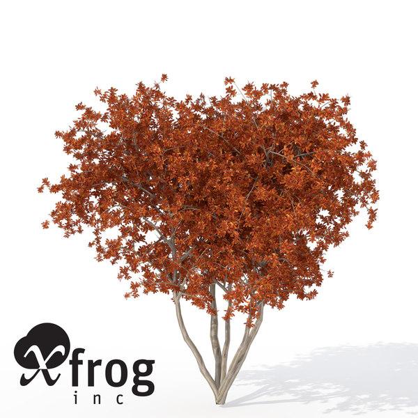 3d model xfrogplants autumn crape myrtle