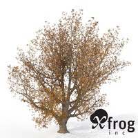 xfrogplants autumn english oak 3d max