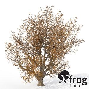 xfrogplants autumn english oak 3d max