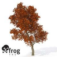 c4d xfrogplants autumn red oak