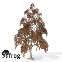 3dsmax xfrogplants autumn bald cypress