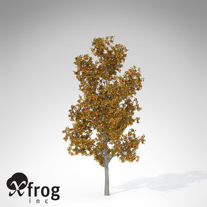 smooth-leaved elm 3d model
