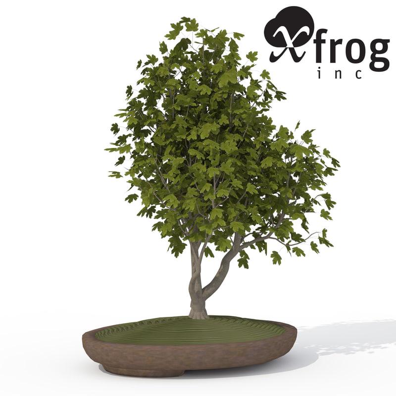 3d xfrogplants bonsai field maple