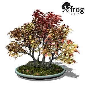 xfrogplants bonsai japanese maple 3d model