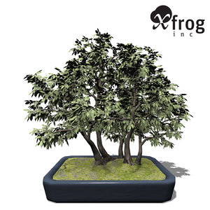 obj xfrogplants bonsai hornbeam