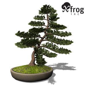 3d xfrogplants bonsai hinoki falsecypress