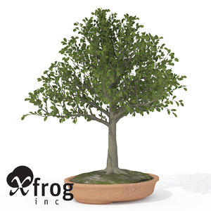 3ds max xfrogplants bonsai european beech
