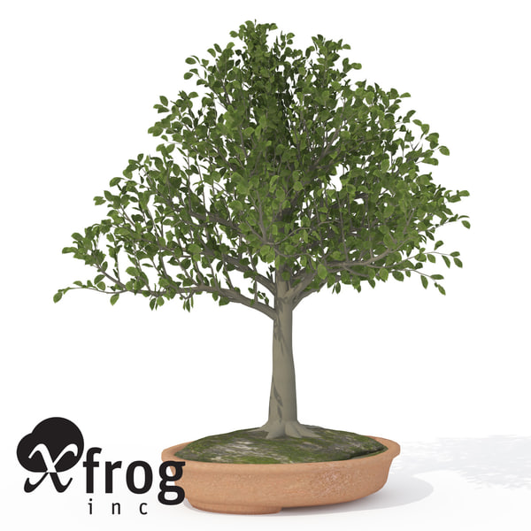 3ds max xfrogplants bonsai european beech