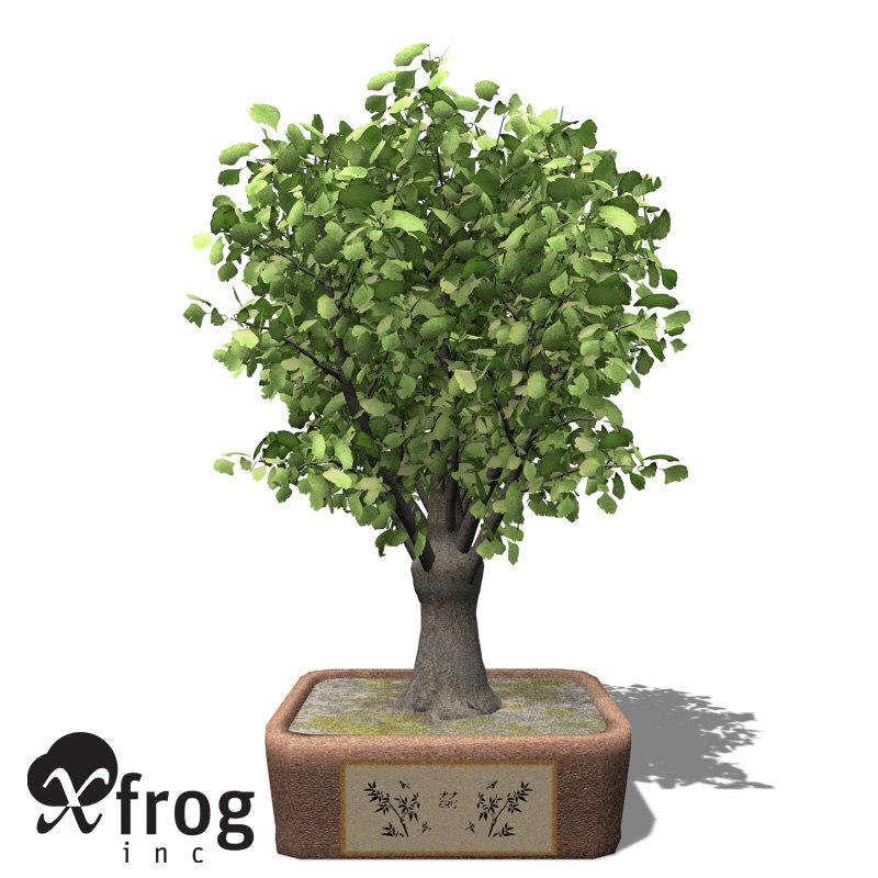 3d xfrogplants bonsai ginkgo model