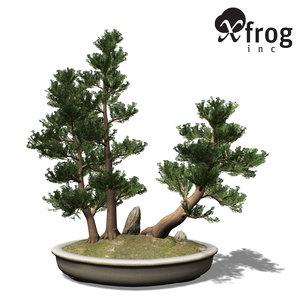 3d xfrogplants bonsai western juniper model