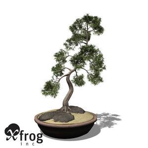 3ds max xfrogplants bonsai temple juniper