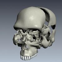human skull (exploding)
