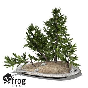 xfrogplants bonsai japanese white max
