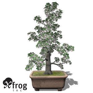 xfrogplants bonsai apple tree 3d model