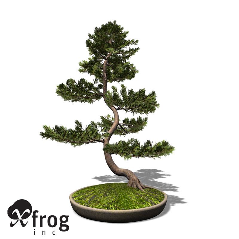 3d model xfrogplants bonsai scotch pine
