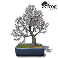 3d xfrogplants bonsai apricot tree model