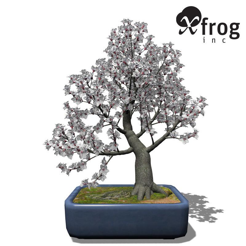 3d xfrogplants bonsai apricot tree model