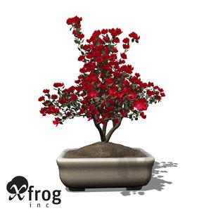 xfrogplants bonsai satsuki azalea 3d 3ds
