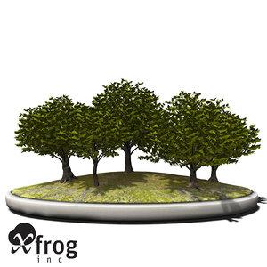3d model xfrogplants bonsai japanese zelkova