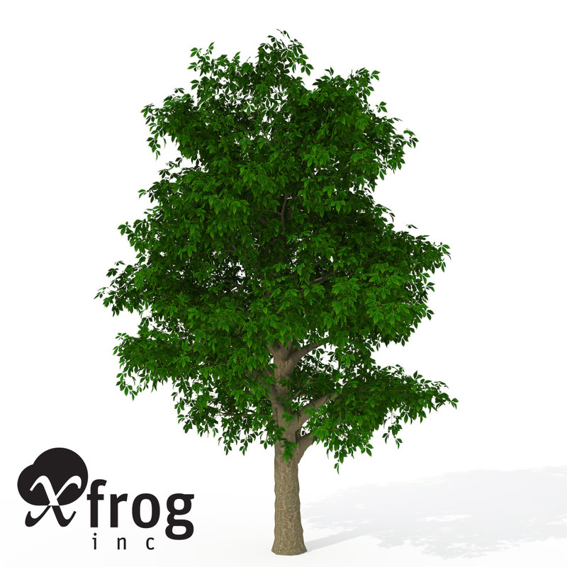 3d 3ds xfrogplants horse chestnut tree