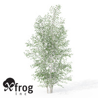 3d xfrogplants grey birch tree model