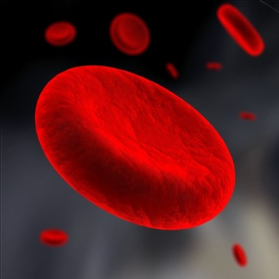 blood cells 3d model